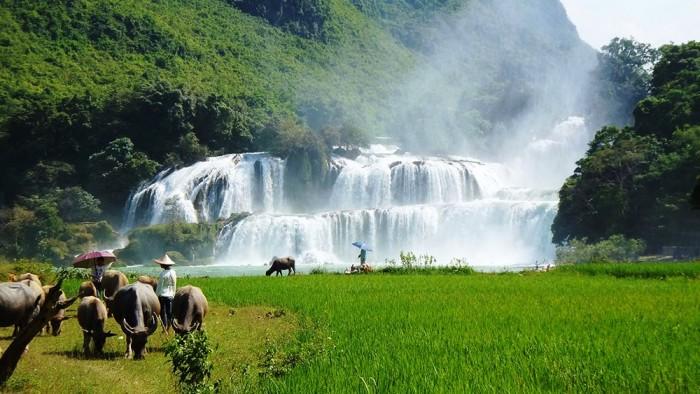 Les magnifiques chutes de Ban Giôc Detian au Vietnam