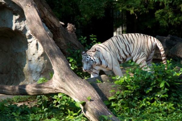 16 - Visiter le Zoo de Dusit
