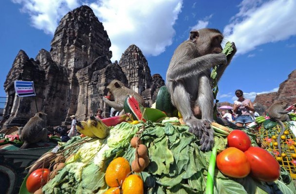 Le Monkey Festival en Thaïlande