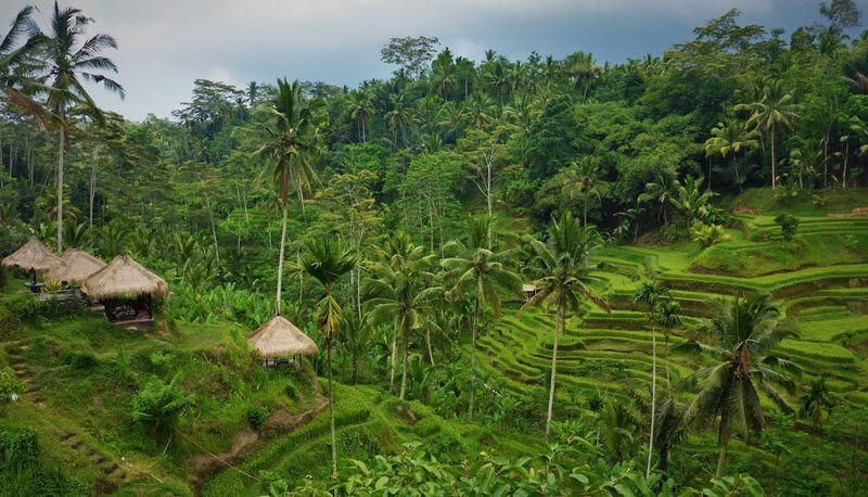 Les rizières de Tegalalang à Bali