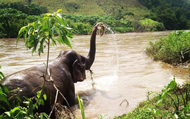 Le Sanctuaire d'éléphants de Burm et Emily (BEES) à Mae Cham en Thailande
