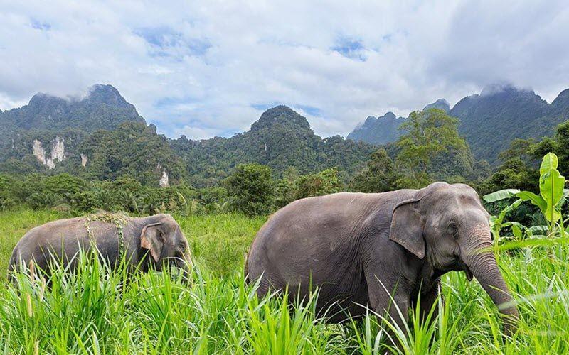 Sanctuaire d'éléphants à Khao Sok en Thailande - Elephant Hills