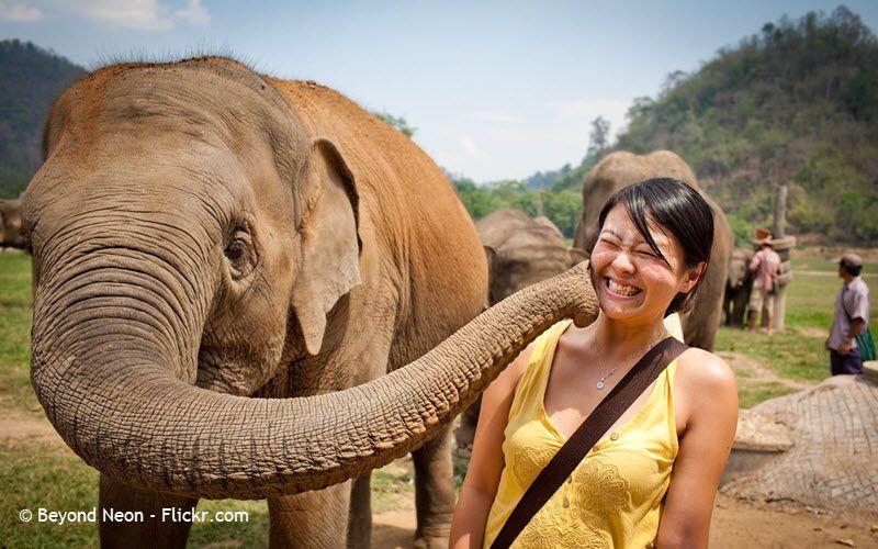 Sanctuaire d'éléphants à Chiang Mai en Thailande -  Elephant Nature Park