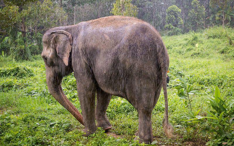 Sanctuaire des éléphants à Phuket en Thailande - Phuket Elephant Sanctuary