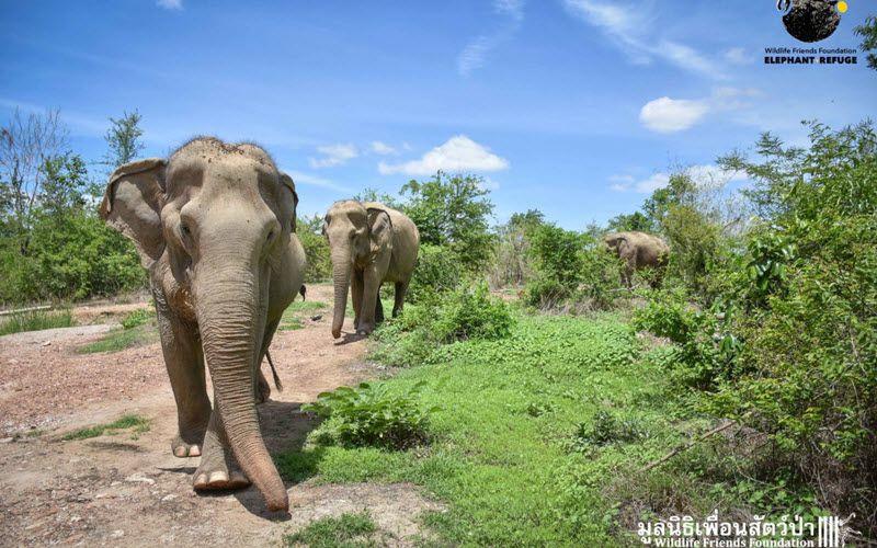 Refuge d'éléphants à Phetchaburi en Thailande - Wildlife Friends Foundation en Thaïlande (WFFT)