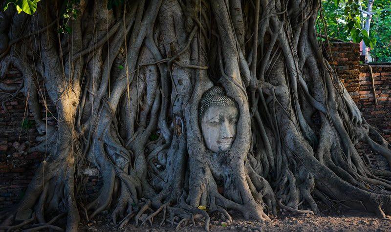 Tête du Bouddha au Wat Maha That à Ayutthaya